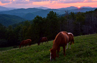 Grazing at Sunset